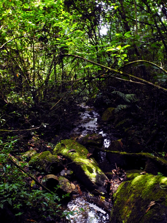Jungle Stream